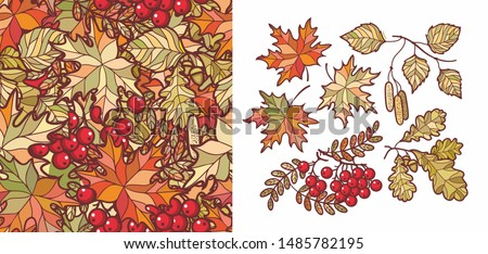 Autumn leaves set with Rowan, maple, birch and oak. Fall leaf design. Foliage forest leaf vector. Red, Green, brown and yellow falling autumn leaves. Autumn leaves seamless pattern. Ash leaf and berry
