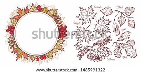 Autumn leaves set with Rowan, maple, birch and oak. Leaves frame.Fall leaf design. Foliage forest leaf vector. Red, Green, brown and yellow falling autumn leaves.Autumn leaves frame.Ash leaf and berry