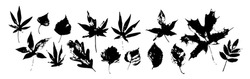 Autumn leaves silhouette set isolated on white background. Different leaf shapes in black and white, grunge texture. Vector illustration