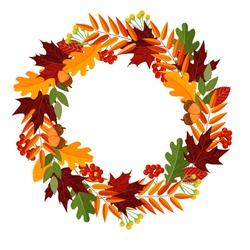 Autumn leaves wreath decor, included rowan berries bunch, oak leaf, maple leaf, acorns. Autumn vector illustratio nisolated on white for your wedding invitation, greeting card, mid season sale banner