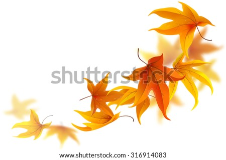 autumn maple leaves falling and
