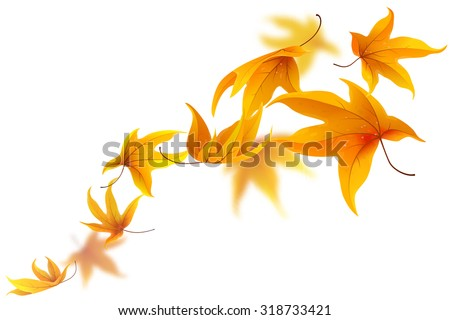 autumn maple leaves falling