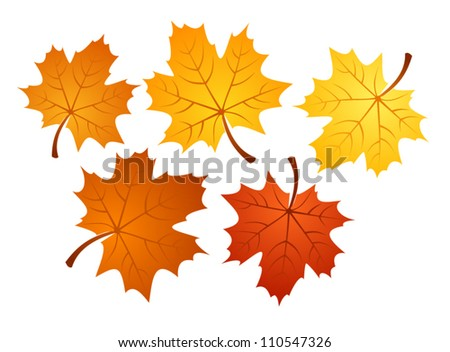 autumn maple leaves of various