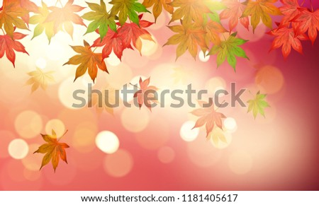 autumn maple leaves with