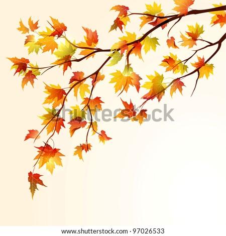 autumn maple tree branch on