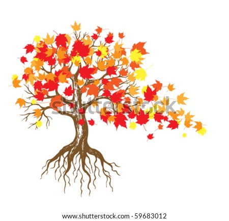 Maple Tree Drawing Autumn Maple Tree With Falling