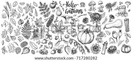 autumn nature vector sketches....