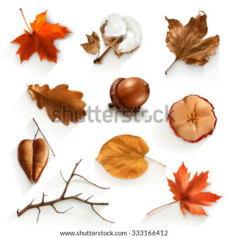 autumn scrap set  vector