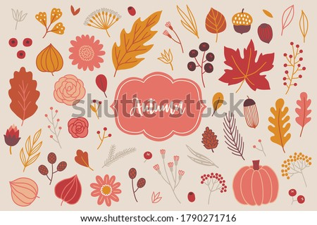 Autumn set - flowers, rose, cone, acorn, berry, pumpkin, fir, branch, oak and maple leaves isolated on light background. Perfect for seasonal holidays, greeting card. Hand drawn vector illustration