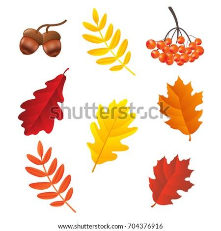autumn set  vector illustration