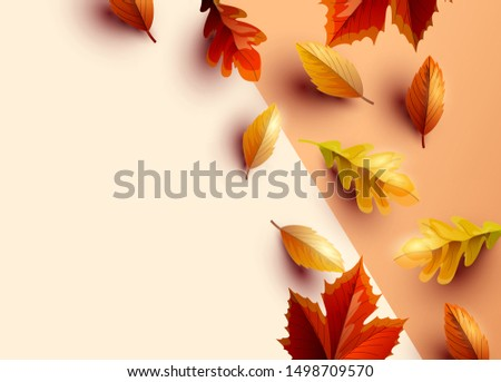 Autumn themed background with colourful leaves, vector illustration.