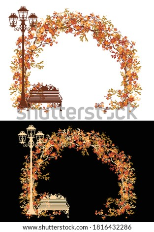 autumn tree branches arch in
