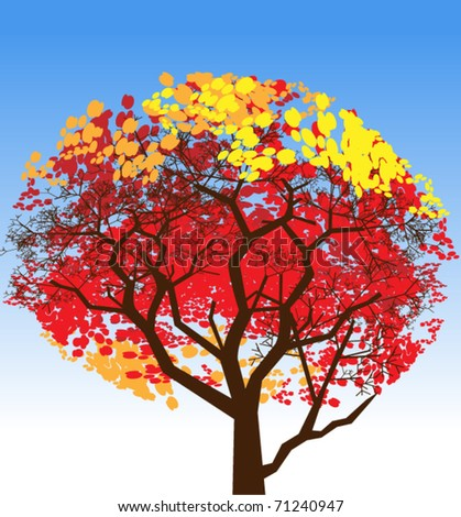 Autumn tree. Powerful tree in a bright colorful attire of autumn  leaves
