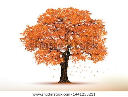 autumn tree vectorrealistic