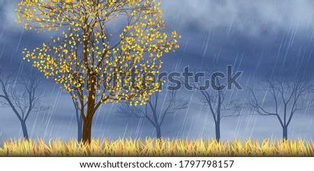 autumn view  trees dramatic