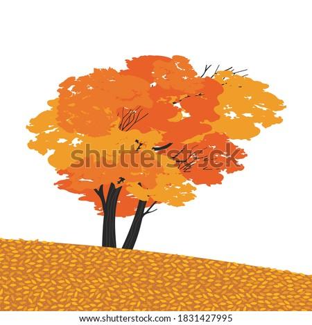 autumnal fall maple tree flat