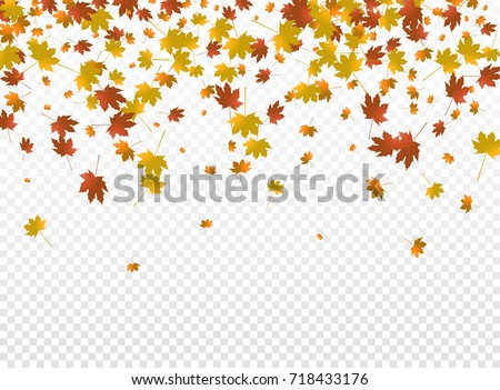 Autumnal vector background. Autumn falling leaves on transparent background. Autumnal foliage fall of maple leaves.
