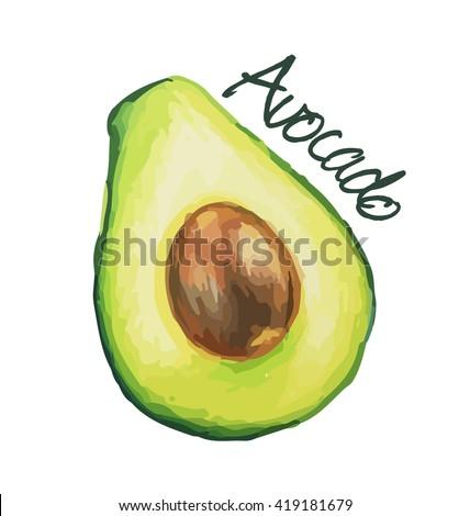 Avocado. Hand drawn watercolor painting. Vector illustration.
