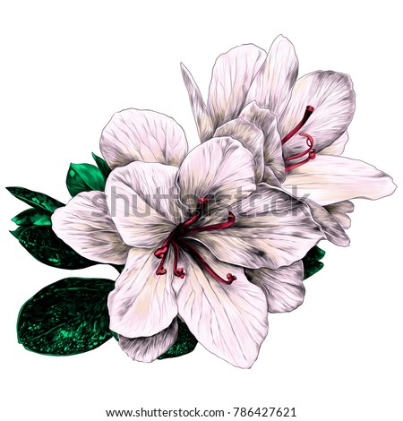 Azalea flowers with leaves sketch vector graphics color picture