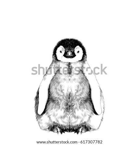 baby penguin small and cute is