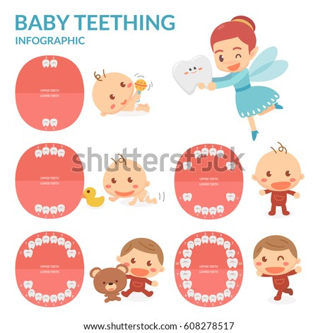 Baby Teething. Tooth Fairy. Period of eruption and shedding of baby's teeth. Flat design.