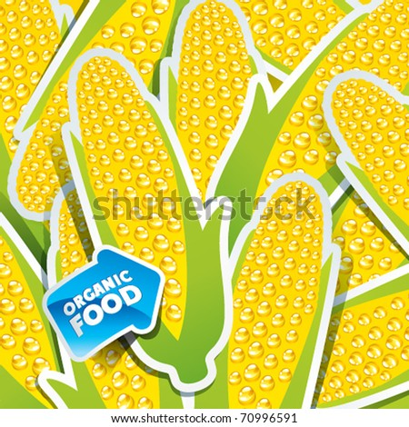 Background from corn cobs with an arrow by organic food. Vector illustration.