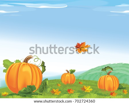 Background of field with pumpkins. Rural Landscape with Pumpkins for Thanksgiving Day. Vector illustration.