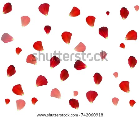 Background of Naturalistic Rose Petals. Vector Illustration. EPS10