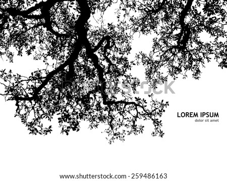 background silhouette of tree