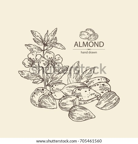 Background with almond: almond nuts, flowers and leaves. Vector hand drawn illustration.