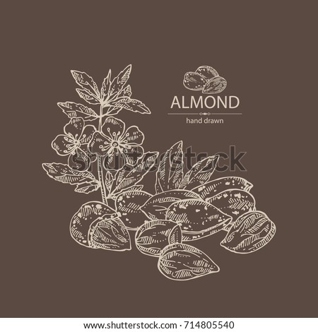 Background with almond: almond nuts, fruits, flower and leaves. Vector hand drawn illustration.