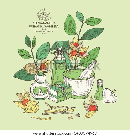 Background with ashwagandha: ashwagandha branch, root, berries, soap and bath salt . Withania somnifera. Cosmetic and medical plant. Vector hand drawn illustration