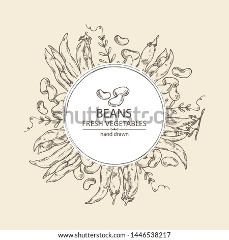 Background with beans: beans pod and plant. Vector hand drawn illustration