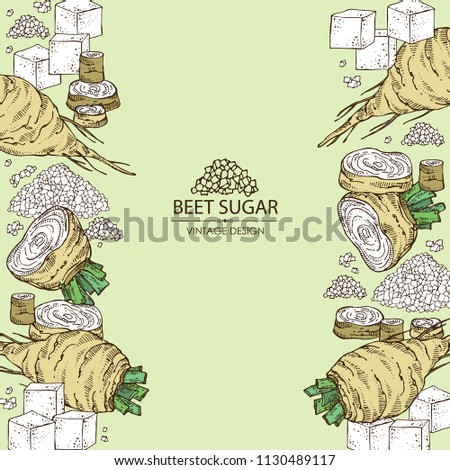 Background with beet sugar: sugar and beet. Vector hand drawn illustration.