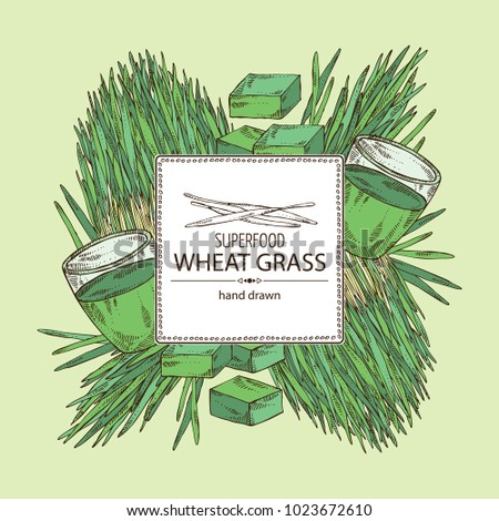 Background with bundle of wheat grass and cocktail of juice wheat grass. Superfood. Vector hand drawn illustration.