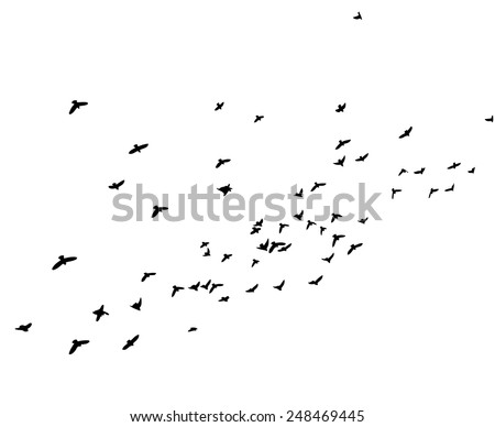 background with flying birds