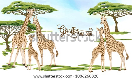 Background with giraffe family in savanna.  Good for greeting card for birthday, invitation or banner of safari, zoo or family party. Vector Illustration.