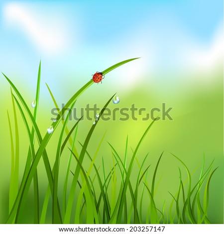 background with grass  dew