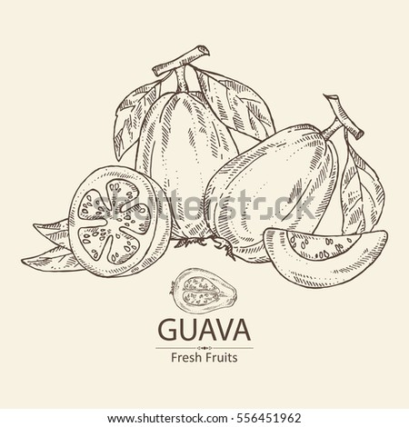 Background with guava and guava slice. hand drawn #556451962