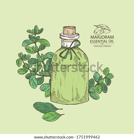 Background with marjoram and bottle of marjoram essential oil. Cosmetic, perfumery and medical plant. Vector hand drawn illustration. Stock photo ©