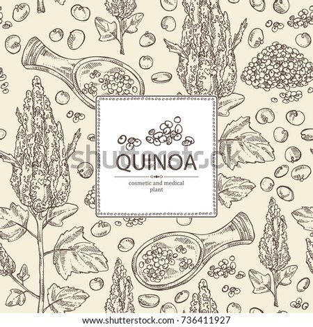 Background with quinoa: plant and quinoa seeds. Super food. Vector hand drawn illustration.