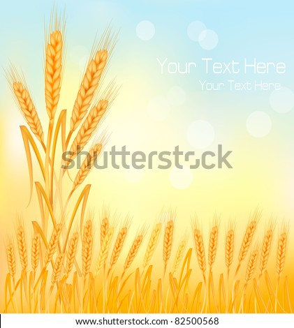 Background with ripe yellow wheat ears, agricultural vector illustration