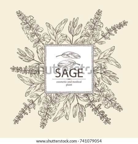 Background with sage, branch of sage, leaves and flowers. Cosmetic, perfumery and medical plant. Vector hand drawn illustration