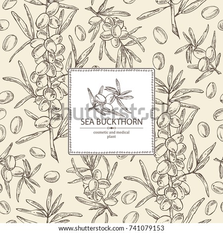 Background with sea buckthorn: branch of sea buckthorn, berries and leaves. Cosmetic and medical plant. Vector hand drawn illustration.