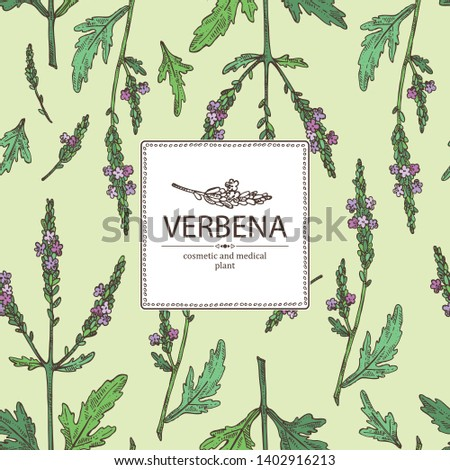 stock-vector-background-with-verbena-verbena-flowering-branch-and-leaves-cosmetic-and-medical-plant-vector-1402916213