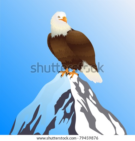 Bald eagle standing on a mountain peak