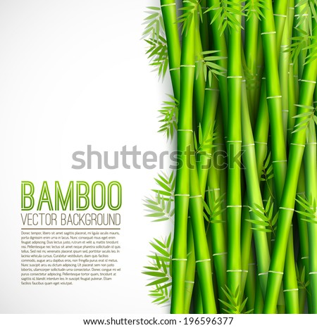 bamboo  background concept