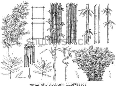 bamboo colelction illustration
