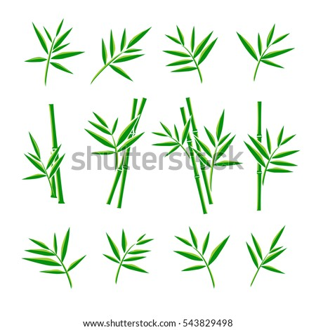 Bamboo collection set. Vector