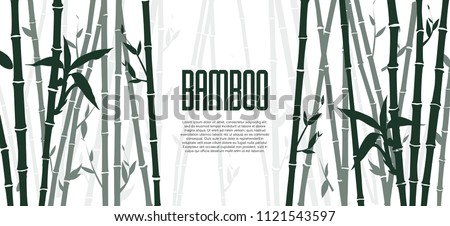 bamboo forest set nature